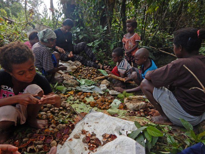 Warga As memasak Buah Raja (Na) di tepi sungai Isahit, Distrik Aifat Barat, Kabupaten Maybrat, Provinsi Papua Barat (06/11).(dok.Hermitianta).